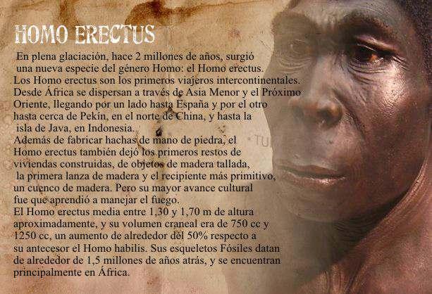 homo erectus caracteristicas